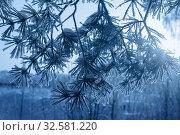 Купить «Winter forest with frost. Color of year 2020 Classic Blue pantone», фото № 32581220, снято 23 января 2018 г. (c) Майя Крученкова / Фотобанк Лори