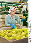 Купить «Employee inspecting quality of apples in sorting factory», фото № 32587972, снято 21 февраля 2020 г. (c) Яков Филимонов / Фотобанк Лори