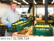 adult man working on fruit sorting line, carrying box with apples in storage. Стоковое фото, фотограф Яков Филимонов / Фотобанк Лори
