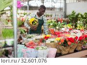 Купить «Farmer cultivating Begonia semperflorens in greenhouse», фото № 32601076, снято 22 мая 2019 г. (c) Яков Филимонов / Фотобанк Лори