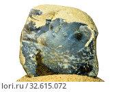 Blue quartzite of the Baltic sea. Стоковое фото, фотограф Hans-Joachim Schneider / easy Fotostock / Фотобанк Лори