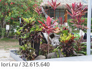 Тропические растения на территории отеля острова Бекана Фиджи (2019 год). Стоковое фото, фотограф Юрий Хабаров / Фотобанк Лори