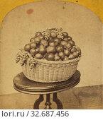 Купить «Autumn Treasures., Edward and Henry T. Anthony & Co. (American, 1862 - 1902), about 1864–1868, Albumen silver print», фото № 32687456, снято 17 июня 2019 г. (c) age Fotostock / Фотобанк Лори