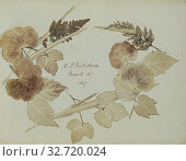 Купить «Wreath of leaves and branches, John Wheeley Gough Gutch (British, 1806 - 1862), England, about 1857, Salted paper print, 21.3 × 28.2 cm (8 3/8 × 11 1/8 in.)», фото № 32720024, снято 17 июня 2019 г. (c) age Fotostock / Фотобанк Лори