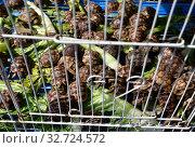 Купить «Doha, Qatar. Selling turtles on Souq Waqif - marketplace for selling traditional garments.», фото № 32724572, снято 21 ноября 2019 г. (c) Володина Ольга / Фотобанк Лори