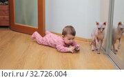 Купить «Baby girl playing with ball while lying on floor, sphynx cat trying to touch toy with paw», видеоролик № 32726004, снято 10 декабря 2019 г. (c) Кекяляйнен Андрей / Фотобанк Лори