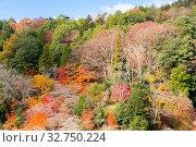 Nagoya, Obara. Autumn Landscape with sakura blossom. Shikizakura kind of sakura blooms once in spring, and again in autumn. Стоковое фото, фотограф Zoonar.com/Vichaya Kiatying-Angsulee / easy Fotostock / Фотобанк Лори