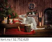 Купить «A little cute rat in his cozy house», фото № 32752620, снято 19 декабря 2019 г. (c) Алексей Кузнецов / Фотобанк Лори