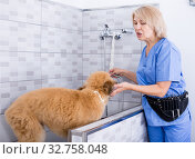 Купить «professional wash puppy in hair salon for animals», фото № 32758048, снято 17 октября 2017 г. (c) Татьяна Яцевич / Фотобанк Лори
