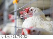 Купить «egg factory plant agriculture poultry chicken farm», фото № 32765324, снято 12 декабря 2019 г. (c) Mark Agnor / Фотобанк Лори