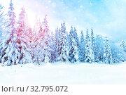 Spruce forest in winter. Winter landscape. Beautiful winter wonderland during the sunny day. Стоковое фото, фотограф Евгений Ткачёв / Фотобанк Лори