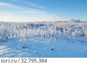 Купить «Зимний пейзаж с заснеженной травой», фото № 32795384, снято 29 декабря 2014 г. (c) Елена Коромыслова / Фотобанк Лори