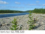 Купить «Summer in the Polar Urals.», фото № 32798320, снято 13 августа 2019 г. (c) Сергей Дрозд / Фотобанк Лори