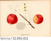Gdansk cantaloupe, Swiss apple variety, Signed: Color print by J. Tribelhorn, Fig. 11, Tribelhorn, J. (imp.), 1863, Schweizerisch. Landwirtschaftl. Verein... Редакционное фото, фотограф ARTOKOLORO QUINT LOX LIMITED / age Fotostock / Фотобанк Лори