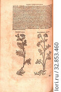 Купить «Tanacetum, Daucus Selinoides, Illustration of a usury flower and a plant called Daucus Selinoides from the 16th century, Fig. 126, p. 154v, 1561, Valerius...», фото № 32853460, снято 10 июля 2020 г. (c) age Fotostock / Фотобанк Лори