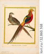 Chrysolophus pictus, Print, The golden pheasant or Chinese pheasant (Chrysolophus pictus) is a gamebird of the order Galliformes (gallinaceous birds) and... (2019 год). Редакционное фото, фотограф ARTOKOLORO QUINT LOX LIMITED / age Fotostock / Фотобанк Лори