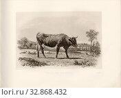Pinzgau cow, Austrian cattle breed, cow, signed: Phot., Nadar jne, Emile Van Marcke, Reefaut Heliog., et sculp, Pl. XLV, S. 107, Tournachon, Adrien Alban... Редакционное фото, фотограф ARTOKOLORO QUINT LOX LIMITED / age Fotostock / Фотобанк Лори