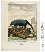 Dasypus giganteus, Print, Dasypus is the only extant genus in the family Dasypodidae. Its species are known as long-nosed or naked-tailed armadillos. They... (2019 год). Редакционное фото, фотограф ARTOKOLORO QUINT LOX LIMITED / age Fotostock / Фотобанк Лори