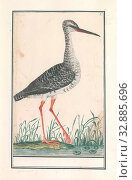 Купить «Redshank (Tringa totanus), Redshank. Numbered top right: 2. Part of the third album with drawings of birds. Fifth of twelve albums with drawings of animals...», фото № 32885696, снято 30 мая 2020 г. (c) age Fotostock / Фотобанк Лори