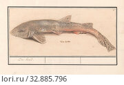 Купить «Dogfish (Scyliorhinus canicula), Sea dog (title on object), Dogfish. Numbered top right: 3. At the bottom the Dutch name. Part of the sixth album with...», фото № 32885796, снято 30 мая 2020 г. (c) age Fotostock / Фотобанк Лори