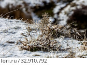 Купить «Icy plants in the mountains (Greece, Peloponnese) on a winter», фото № 32910792, снято 24 декабря 2019 г. (c) Татьяна Ляпи / Фотобанк Лори