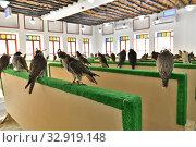 Selling falcons in Waqif Souq market in Doha, Qatar. Стоковое фото, фотограф Володина Ольга / Фотобанк Лори