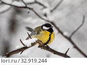 Купить «Синица сидит на ветке в зимнем лесу», фото № 32919244, снято 11 января 2020 г. (c) Николай Винокуров / Фотобанк Лори