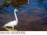 Купить «A portrait shot of a large common bird chilling around the park of Gatorland», фото № 32933832, снято 23 февраля 2020 г. (c) easy Fotostock / Фотобанк Лори