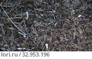 Купить «Муравьи в муравейнике», видеоролик № 32953196, снято 12 мая 2018 г. (c) Виктор Карасев / Фотобанк Лори