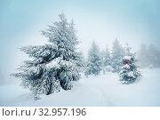 Scenic snow-covered forest in winter season. Good for Christmas background. Стоковое фото, фотограф Zoonar.com/Galyna Andrushko / easy Fotostock / Фотобанк Лори