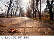 Купить «Track with fallen maple leaves.», фото № 32961996, снято 19 ноября 2019 г. (c) Елена Блохина / Фотобанк Лори