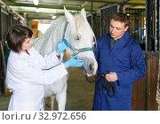 Vet checking horse at stable. Стоковое фото, фотограф Яков Филимонов / Фотобанк Лори