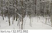 Купить «Wood in snow. Winter landscape», видеоролик № 32972992, снято 22 января 2020 г. (c) Ильин Сергей / Фотобанк Лори