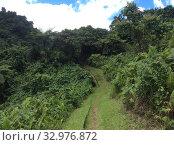 Тропинка через джунгли на острове Тавеуни. Стоковое фото, фотограф Юрий Хабаров / Фотобанк Лори
