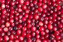 Купить «Спелые ягоды клюквы, фон», фото № 32977264, снято 11 сентября 2019 г. (c) Елена Коромыслова / Фотобанк Лори
