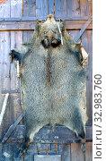 Шкура убитого кабана прибита на деревянных воротах. Стоковое фото, фотограф Ирина Борсученко / Фотобанк Лори