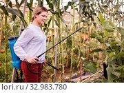 Купить «Woman working with spraying apparatus in hothouse at sunny day», фото № 32983780, снято 13 августа 2018 г. (c) Яков Филимонов / Фотобанк Лори