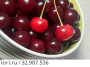 Купить «In a ceramic vase on the table large ripe cherry dark cherry color and two red cherries with green cuttings. Presents major plan.», фото № 32987536, снято 2 июня 2020 г. (c) easy Fotostock / Фотобанк Лори