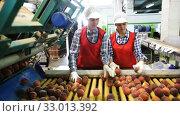 Купить «Female employees in uniform sorting fresh ripe peaches on producing grading line at fruit warehouse», видеоролик № 33013392, снято 3 августа 2019 г. (c) Яков Филимонов / Фотобанк Лори