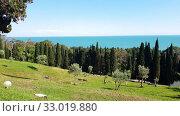 Купить «nature in Abkhazia near New Athos in summer», видеоролик № 33019880, снято 2 февраля 2020 г. (c) Володина Ольга / Фотобанк Лори