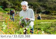 Купить «Sad woman working on vegetable garden», фото № 33020388, снято 18 марта 2019 г. (c) Яков Филимонов / Фотобанк Лори
