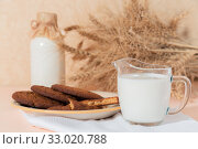 Купить «Healthy food, breakfast, cereal snack. Fresh milk in a glass jug and oatmeal cookies on the table, an armful of ears of corn on a peach color background. A balanced diet, protein and carbohydrates», фото № 33020788, снято 30 ноября 2019 г. (c) Светлана Евграфова / Фотобанк Лори