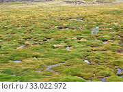 Купить «Bofedal is a kind of wetland found in Bolivia, Chile and Peru Andes. This ecosystem is dominated by Juncaceae plants like Distichia muscoides and Oxychloe...», фото № 33022972, снято 21 ноября 2019 г. (c) age Fotostock / Фотобанк Лори
