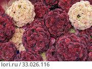 Купить «Full frame dense flower heads closeup», фото № 33026116, снято 2 апреля 2020 г. (c) easy Fotostock / Фотобанк Лори