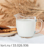 Купить «Healthy food, breakfast, cereal snack. Fresh milk in a glass jug and oatmeal cookies on the table, an armful of ears of corn on a peach color background. A balanced diet, protein and carbohydrates», фото № 33026936, снято 30 ноября 2019 г. (c) Светлана Евграфова / Фотобанк Лори