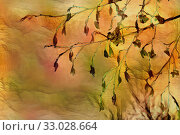 Купить «Yellow leaves on the sky background in autumn», иллюстрация № 33028664 (c) Парушин Евгений / Фотобанк Лори