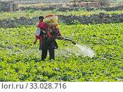 Farmer with manual electric fogger machine spraying pesticides and herbicides. Стоковое фото, фотограф Kira_Yan / Фотобанк Лори