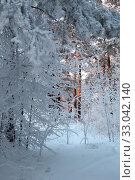Купить «Иней в сосновом бору. Город Заводоуковск», эксклюзивное фото № 33042140, снято 8 января 2020 г. (c) Анатолий Матвейчук / Фотобанк Лори
