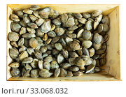Купить «Fresh molluscs in wooden boxes», фото № 33068032, снято 23 февраля 2020 г. (c) Яков Филимонов / Фотобанк Лори