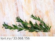 Купить «Green rosemary on wooden background, top view», фото № 33068156, снято 4 апреля 2020 г. (c) Яков Филимонов / Фотобанк Лори